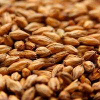 Briess Mesquite Smoked Malt