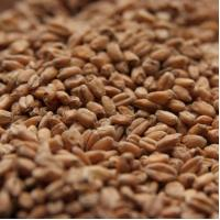 Briess Red Wheat