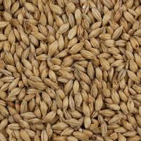 Briess 2-Row Pale Ale Malt