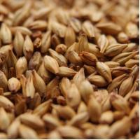 Dingemans Cara 20 Grain Malt