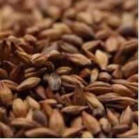 Briess Caramel Munich Malt Grain