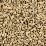 Dingemans Belgian Pilsen Malt Grain