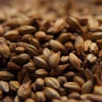 Briess Extra Special Roast Grain Malt