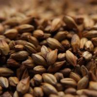 Dingemans Special B Grain Malt