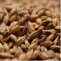Weyermann Caramunich I Grain Malt